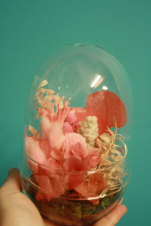 Preserved flower domes